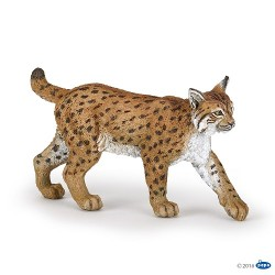 PAPO - Lince